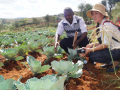 KALRO staff (left) explains the added value of drip irrigation to a delegate