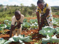 Veronica accompanied by her son shows off the benefits of drip irrigation