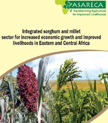 Integrated sorghum and millet sector for increased economic growth and improved livelihoods in Eastern and Central Africa