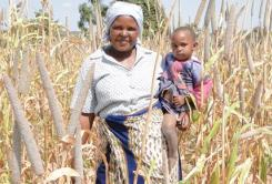 Investing in pearl millet; the pearl of the drylands